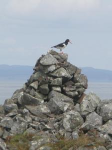 Oyster catcher on cairn